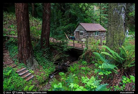 Cabins In The Redwoods Ca by Picture Photo Cabin In The Redwood Forest Big Sur