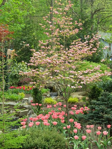 small pink tree beautiful small tree flowering dogwood