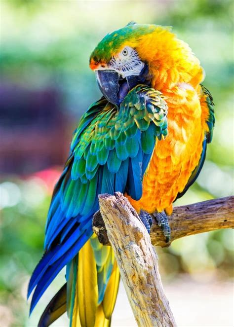 catalina macaw wildlife critters pinterest