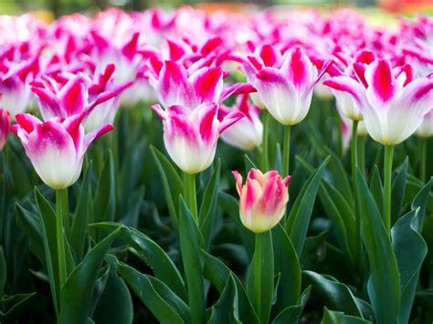 ci fiori portoverde in fiore un tuffo nella mostra mercato di