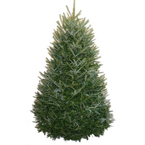 best prices on fresh cut trees best 28 cheap fresh cut trees fresh cut trees for sale right now