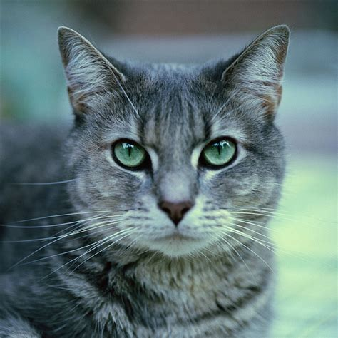 a cat for more information on rehoming a cat or kittens