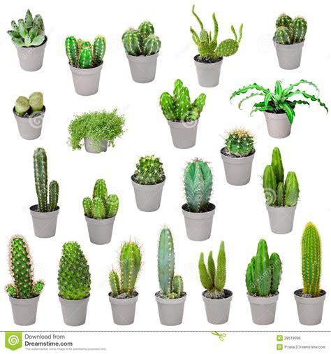 d appartamento insieme delle piante d appartamento in vasi cactus