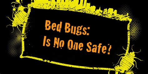 how to fight bed bugs how to fight bed bugs and win