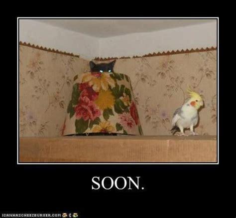Funny Stalker Memes - funny quot soon quot meme 38 pics