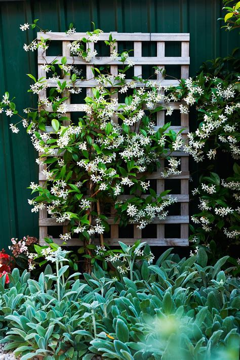 house climbing plants gallery the ultimate guide to climbing plants homes