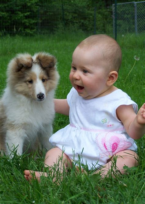 puppies and toddlers 40 best images about and puppies on