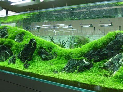 setup aquascape 483 best images about freshwater fish on pinterest