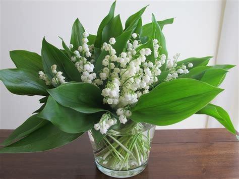 il mughetto fiore fiori di mughetto fiori di piante