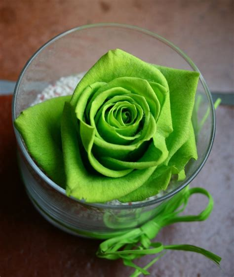 flower wallpaper green rose allinallwalls most beautiful green roses in the world