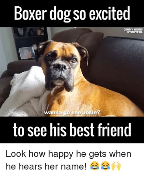 Funny Boxer Dog Memes - boxer meme www pixshark com images galleries with a bite