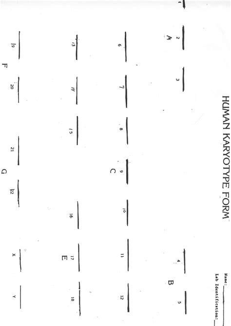 Karyotype Worksheet Answers by Karyotyping