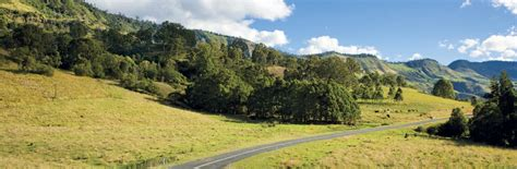 amazing drives   rainforest  tourism australa