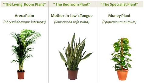 best houseplants for clean air top indoor plants best air filters for homeclean indoor