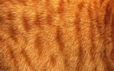 fur wallpaper for bedrooms fur wallpaper wallpapersafari