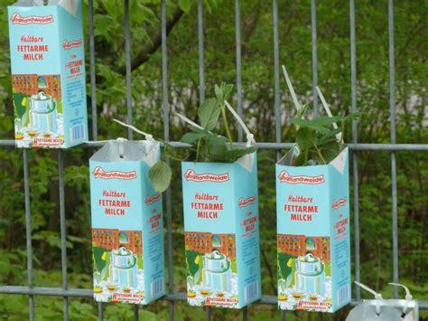 zaunbegrünung zaun pflanzen idee