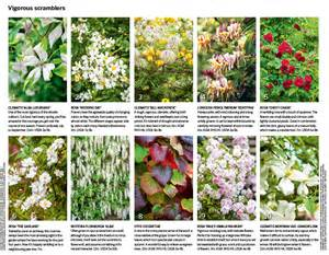 List Of Climbing Plants - 30 of the best climbing plants gardens illustrated