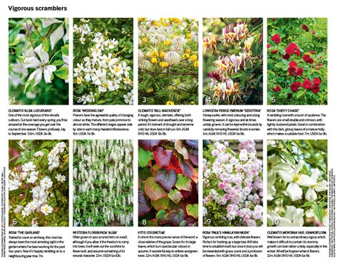 Climbing Plant Names - climbers plants names www imgkid com the image kid has it