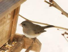 ruhestörung ab wann vogelf 252 tterung ab wann so helfen sie den tieren wirklich