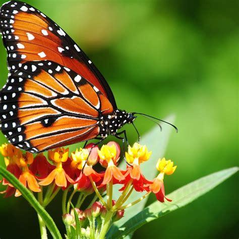 giardino delle farfalle il giardino delle farfalle farfalle assisi giardino