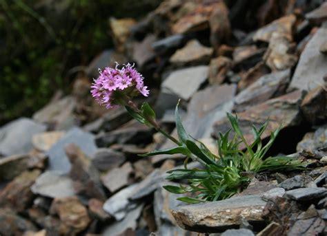 Rock Garden Plants Uk Top 10 Rock Garden Plants Garden Pics And Tips