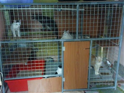Kandang Grooming Kucing pakcu usual pet shop and clinic custom made cages