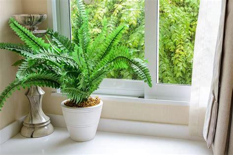 cuidados de las plantas de interior verdecora - Cuidados De Las Plantas De Interior