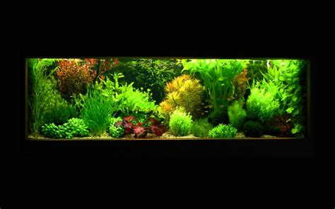 aquascape maintenance aquascape maintenance 20 images best 25 angelfish