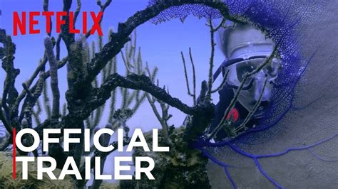 Watch Chasing Coral 2017 Chasing Coral Movie Screening