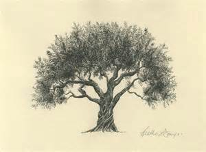 drawings of tree new olive tree drawing flyoung studio