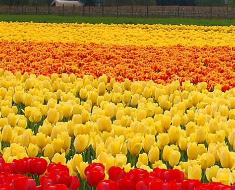 picture of flowers in a garden garden port one spot garden imagine flower garden