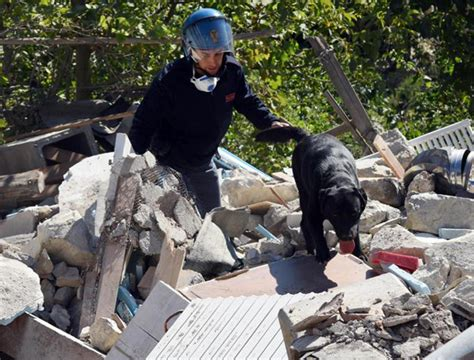 puppies rescued in italy search and rescue dogs saving lives after earthquake in italy
