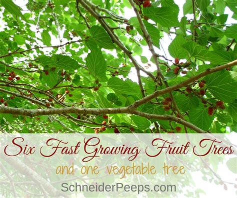 what is the fastest growing fruit tree six fast growing fruit trees and one vegetable