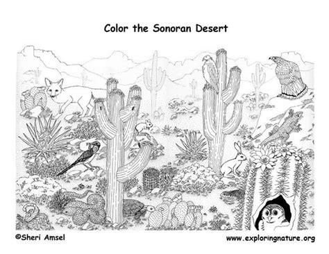 educational coloring books for adults desert detailed coloring page exploring nature educational