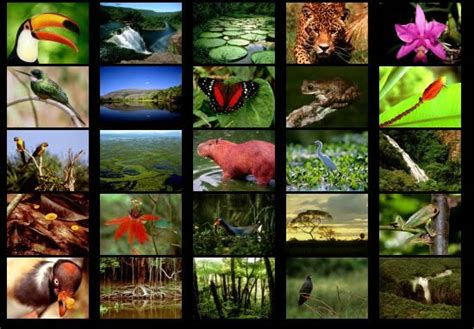 animals and plants that live in the tropical rainforest tropical rainforests in