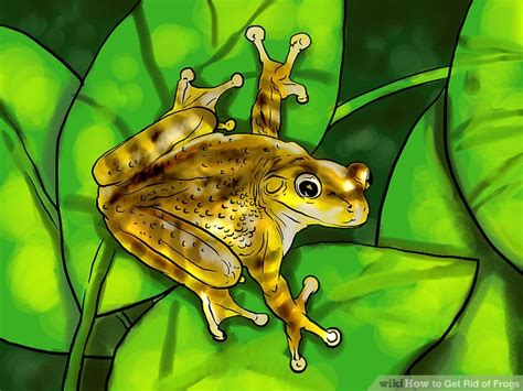 how to get rid of frogs in backyard how to get rid of cane toads in backyard 28 images 100 how to get rid of cane