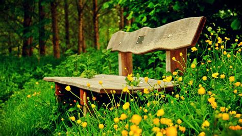 bench in nature bench in nature 2 bench in nature animewatching com