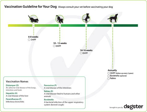 vaccination schedule for dogs vaccination schedule dogster my vaccinations