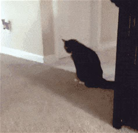 Cat Dragging Bum On Floor by Spicy Gif Find On Giphy