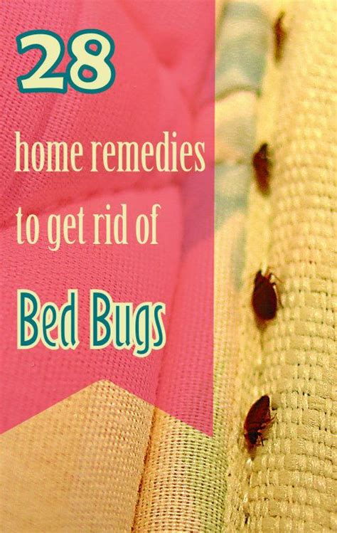 bed bugs home remedies and remedies on