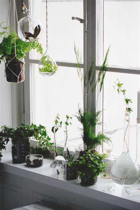 Window Sill Plants Winter 1000 Ideas About Window Sill Decor On Window