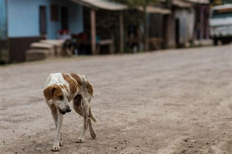 stray puppy save stray dogs from forcechange
