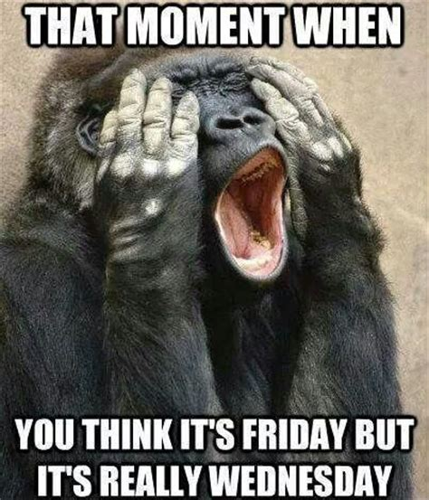 Funny Wednesday Memes - its friday bitches quotes quotesgram