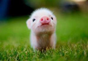 baby animal pics bbanimalpics twitter