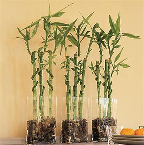 Bamboo Vase Ideas by 25 Best Ideas About Bamboo Centerpieces On