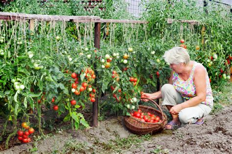 planning a kitchen garden green living ideas
