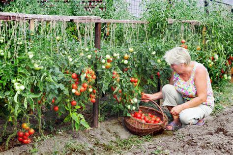 Planning a Perfect Kitchen Garden   Green Living Ideas