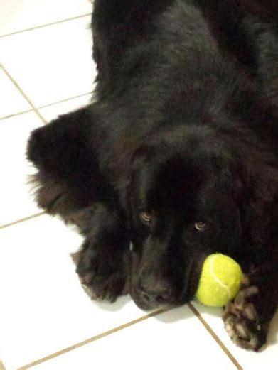 puppies for adoption in oklahoma utica pet adoptions