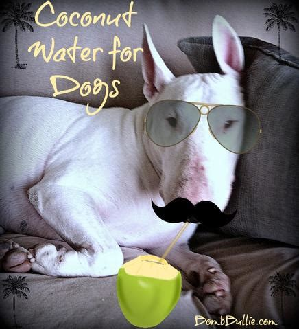 coconut water for dogs coconut water does a home remedies for healthy dogs bombbullie