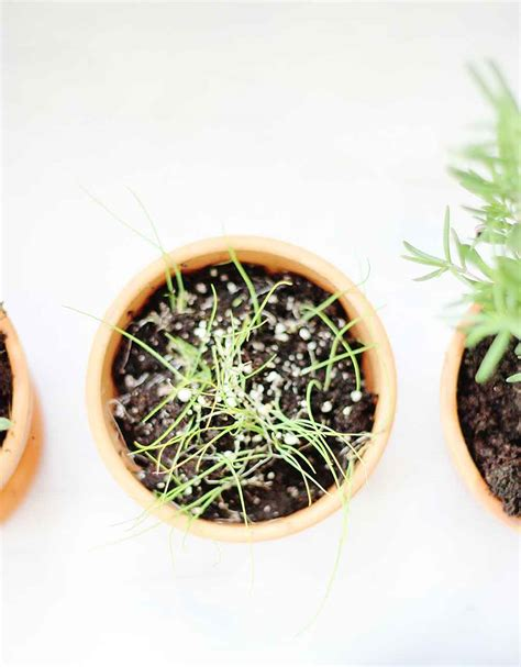 planting an herb garden how to plant an herb garden homes